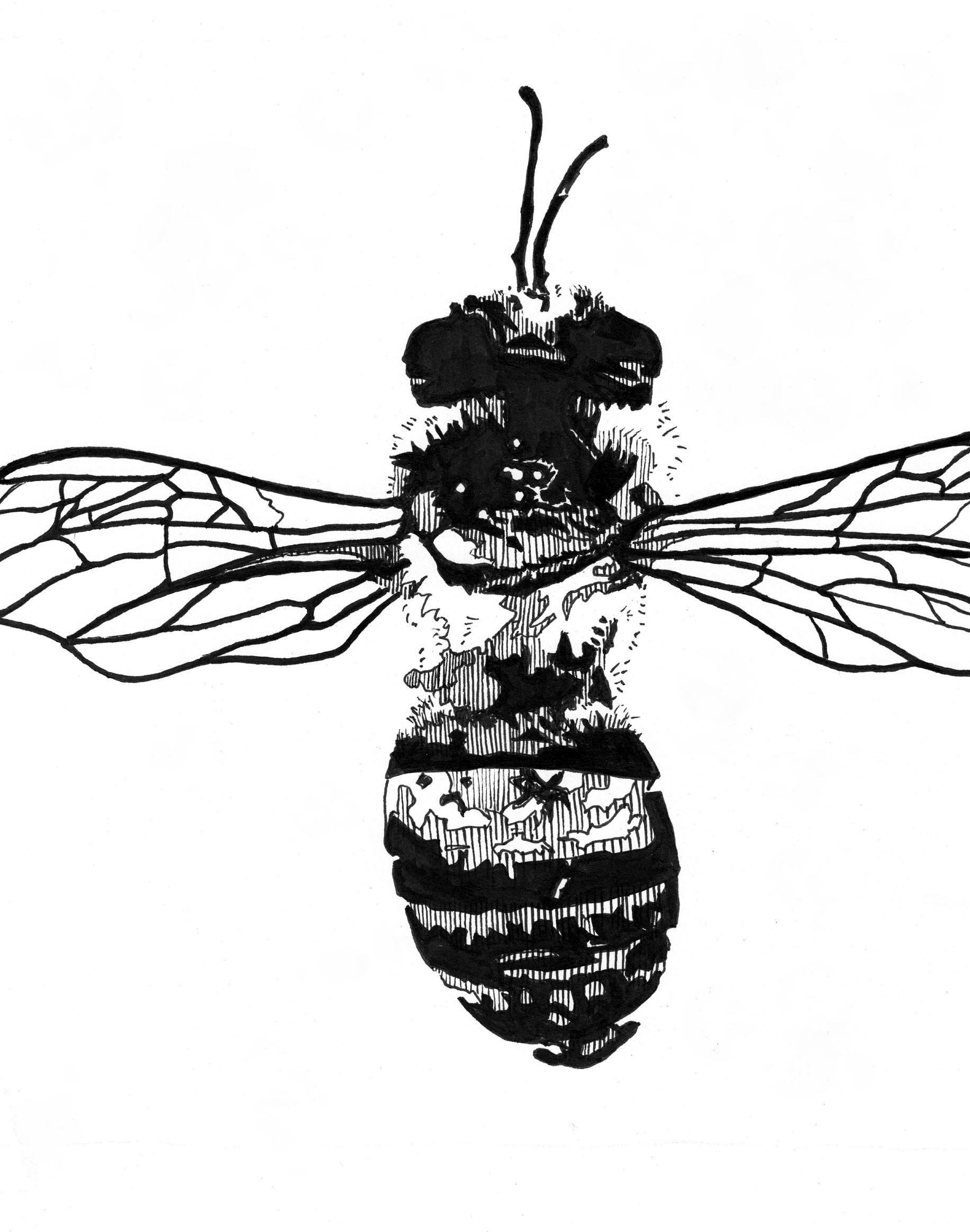bee ink drawing - Copy