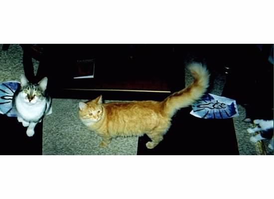 leo kitty 01 with tigger
