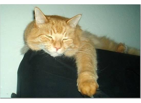 leo kitty 1 sleepy