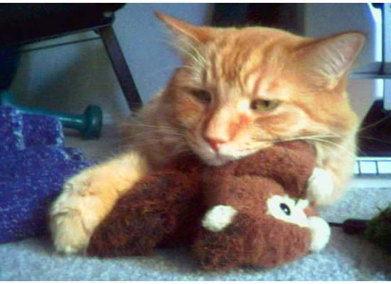 leo kitty 3 with squirrel