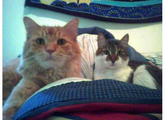 leo kitty 4 with tigger