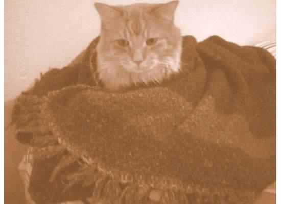leo kitty 5 flying saucer blanket
