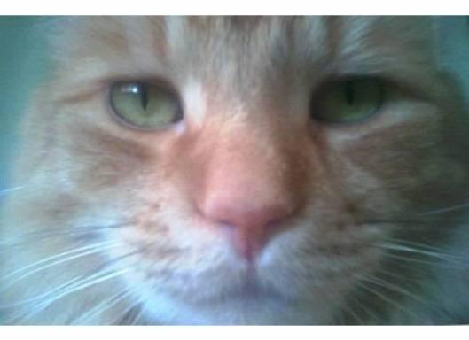 leo kitty 6