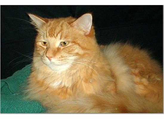 leo kitty 8