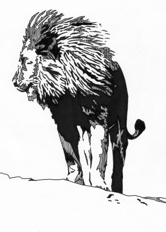 lion 5x7 drawing - Copy
