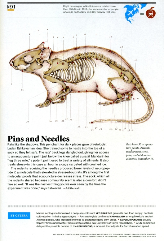 natl geo 6-2012 rat acupuncture-001