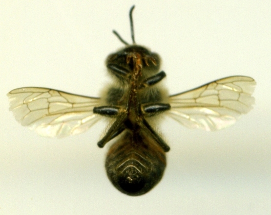 bee scan 1
