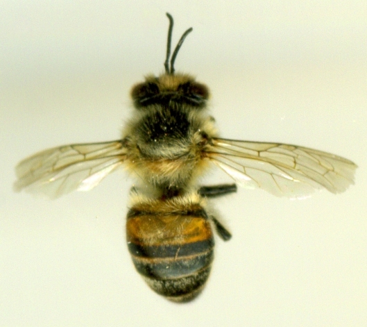 bee scan 2