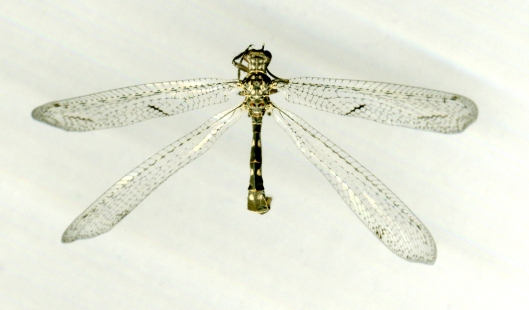 dragonfly scan