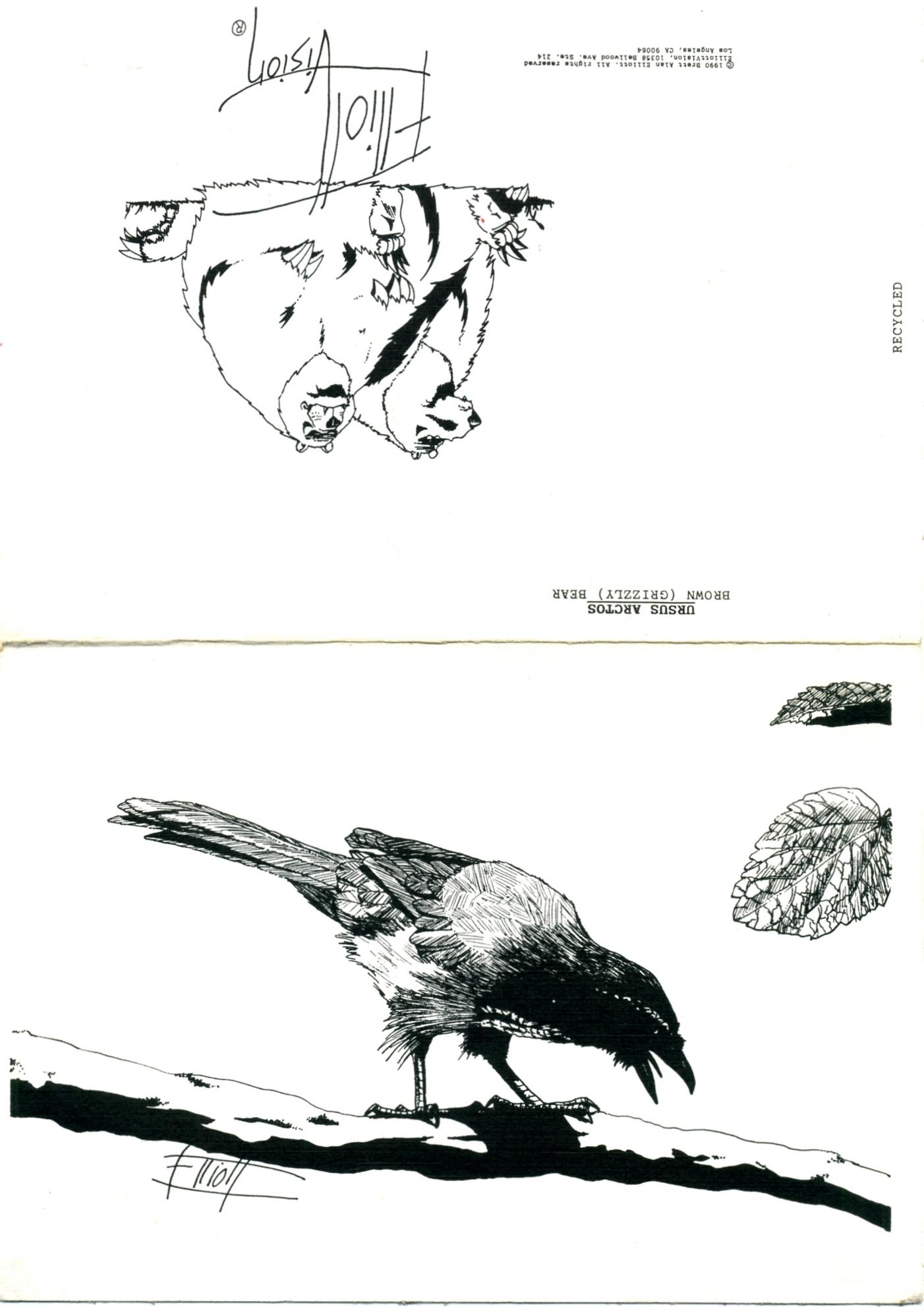 bird by brett alan elliott