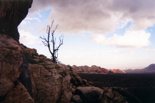 nevada desert -002