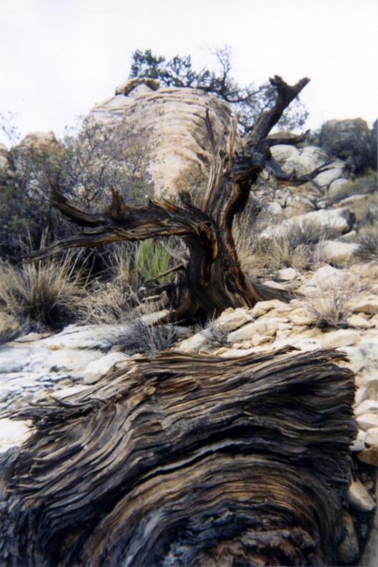 nevada desert -006 red rocks 1