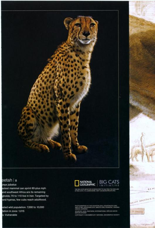 big cats national geographic cats in crisis poster- (6)