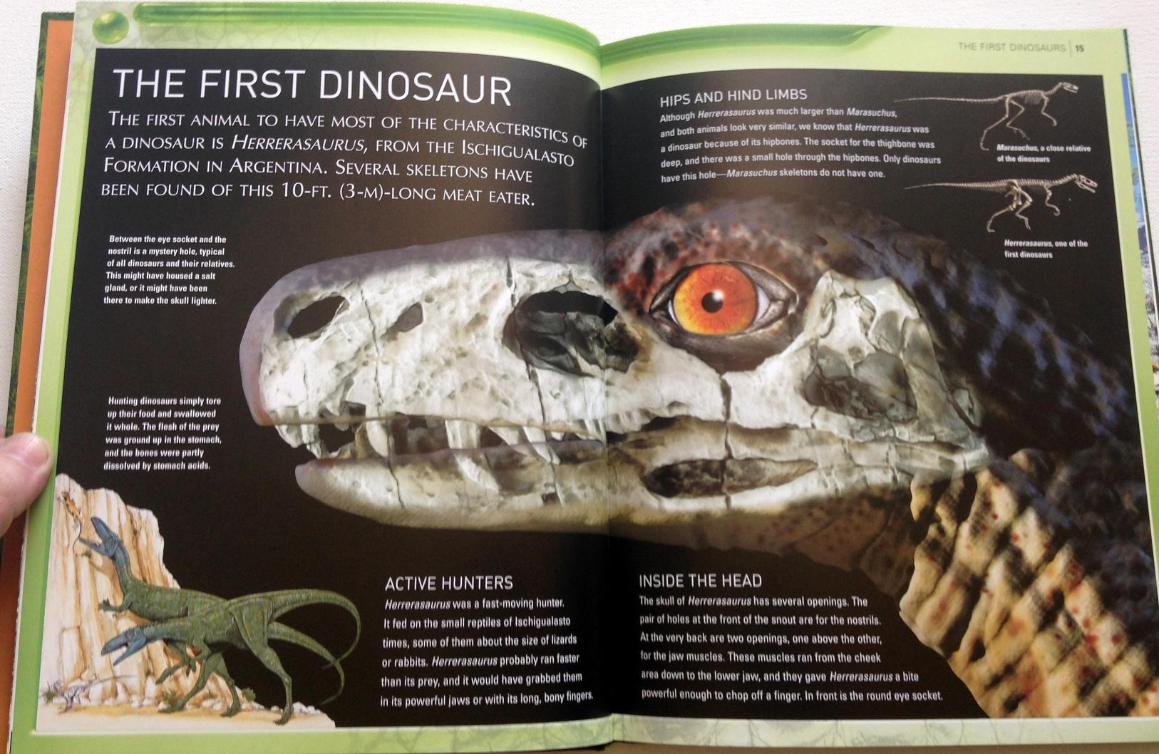 kingfisher dinosaur encyclopedia (5)