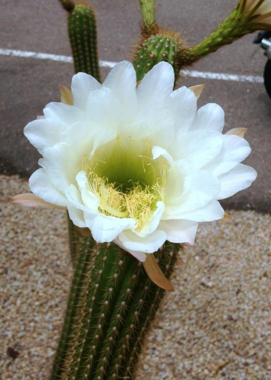mantis and cactus flower 5