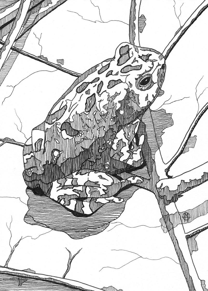 frog on leaf ink drawing - Copy