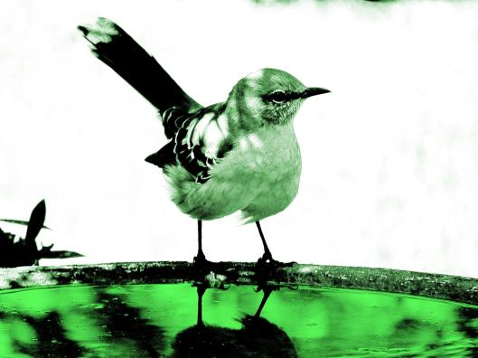 mockingbird green pencil render