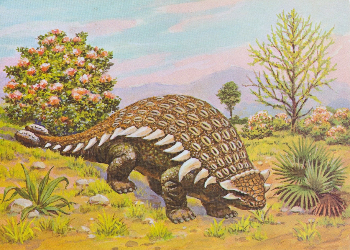 Ankylosaurus (Cretaceous period) - for web