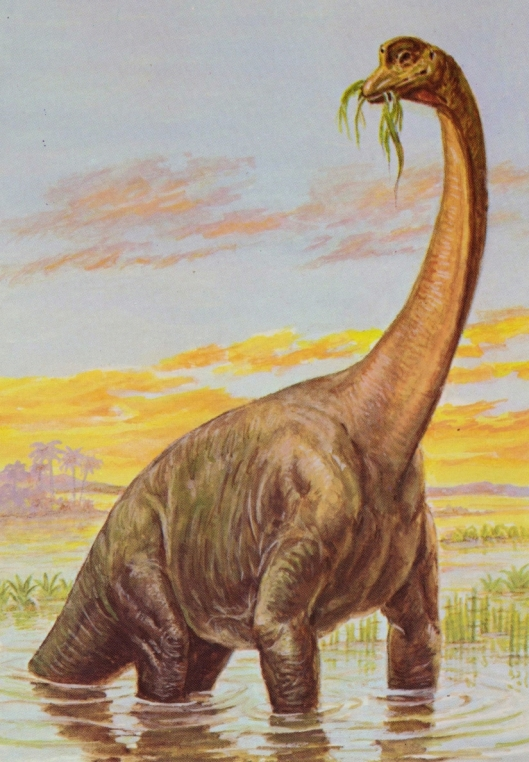 Brachiosaurus (Jurassic period) - for web