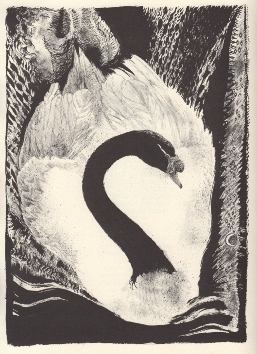swan - jack unruh art of birds