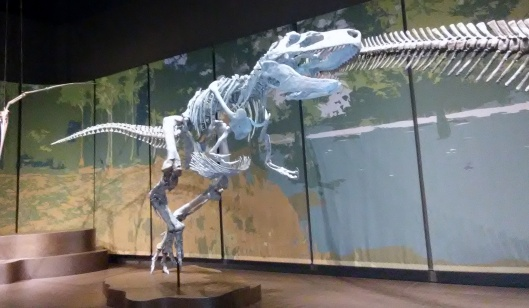 appalachiosaurus tellus science museum jul 2019.jpg