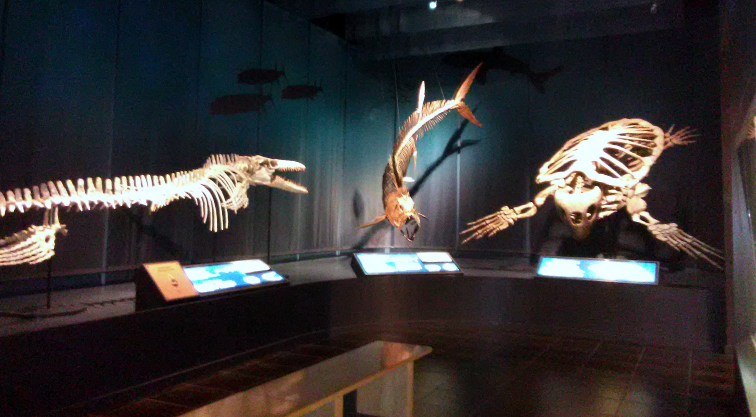 prehistoric sea animals tellus jul 2019
