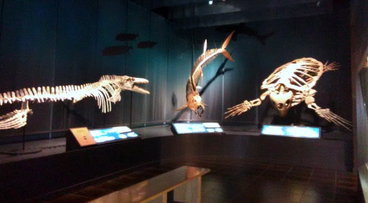 prehistoric sea animals tellus jul 2019