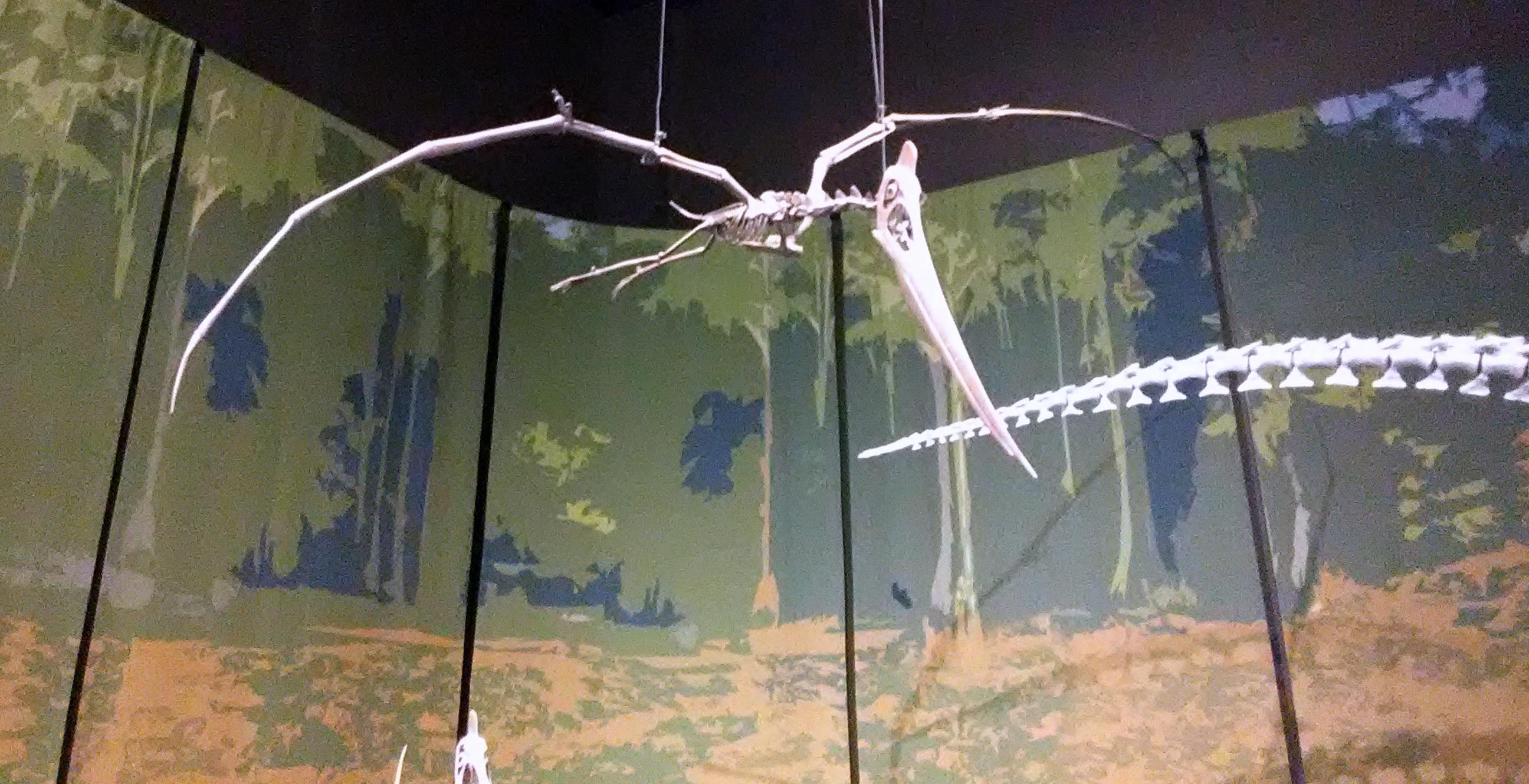 pterosaur tellus science museum jul 2019.jpg